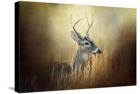 Doe Chasing-Jai Johnson-Stretched Canvas Print