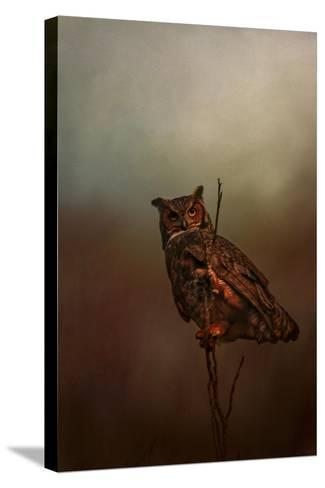 Owl in the Marsh-Jai Johnson-Stretched Canvas Print