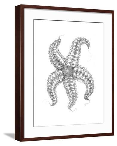 Aquatic Starfish Pencil-Jeff Haynie-Framed Art Print