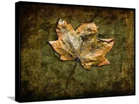 Metallic Leaf 1-LightBoxJournal-Stretched Canvas Print