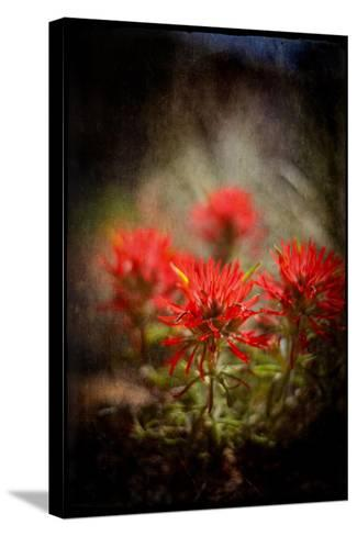 Desert Flower 1-LightBoxJournal-Stretched Canvas Print