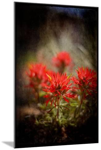 Desert Flower 1-LightBoxJournal-Mounted Giclee Print