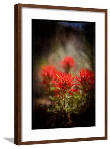Desert Flower 1-LightBoxJournal-Framed Art Print