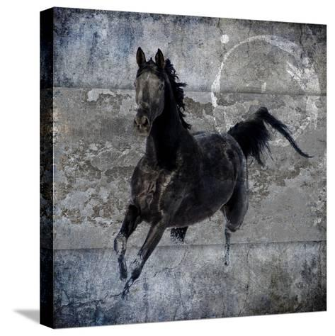 Black Mare 1-LightBoxJournal-Stretched Canvas Print