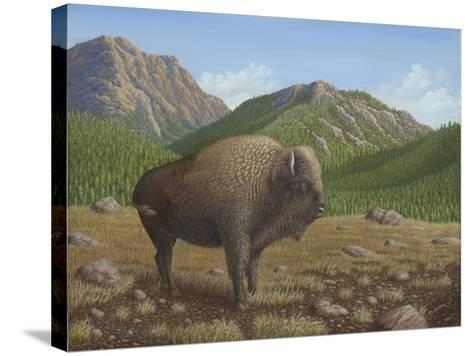 Bison-Robert Wavra-Stretched Canvas Print