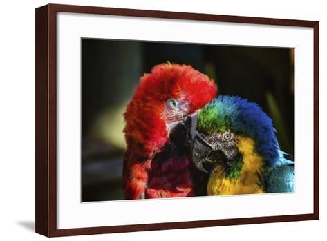 Birds-Pixie Pics-Framed Art Print