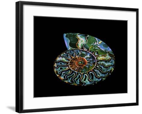 Nautilus I-LightBoxJournal-Framed Art Print