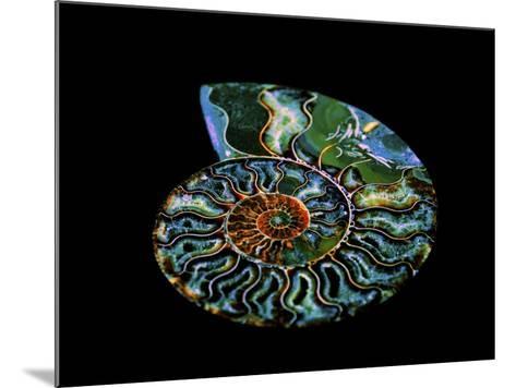 Nautilus I-LightBoxJournal-Mounted Giclee Print