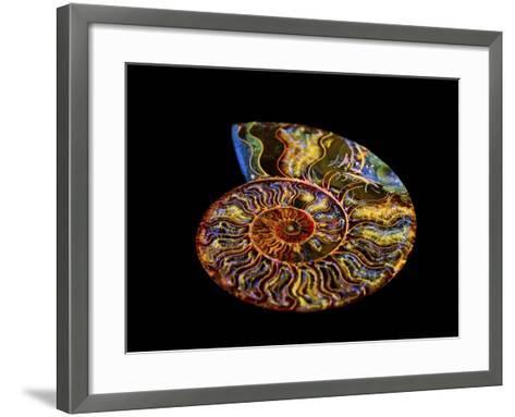 Nautilus III-LightBoxJournal-Framed Art Print