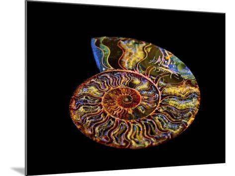 Nautilus III-LightBoxJournal-Mounted Giclee Print