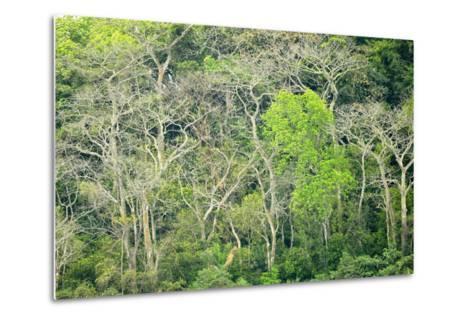 The Dense Tropical Jungle of Barro Colorado Island-Jonathan Kingston-Metal Print