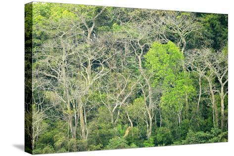 The Dense Tropical Jungle of Barro Colorado Island-Jonathan Kingston-Stretched Canvas Print