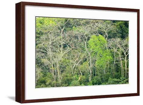 The Dense Tropical Jungle of Barro Colorado Island-Jonathan Kingston-Framed Art Print