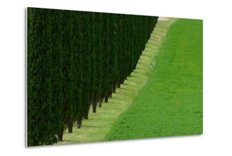 A Dirt Road Lined with Cypress Tree-Raul Touzon-Metal Print