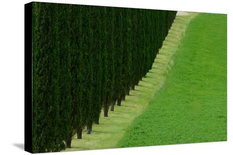 A Dirt Road Lined with Cypress Tree-Raul Touzon-Stretched Canvas Print