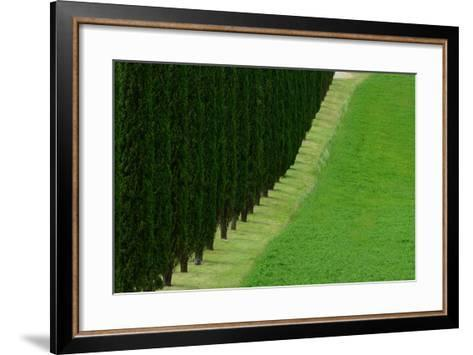 A Dirt Road Lined with Cypress Tree-Raul Touzon-Framed Art Print
