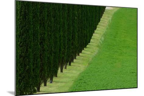 A Dirt Road Lined with Cypress Tree-Raul Touzon-Mounted Photographic Print