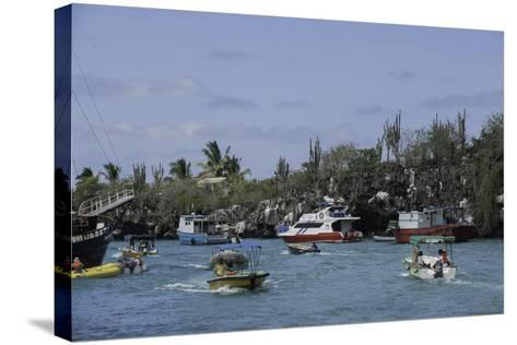 The Busy Harbor at Puerto Ayora, Galapagos Islands-Jad Davenport-Stretched Canvas Print