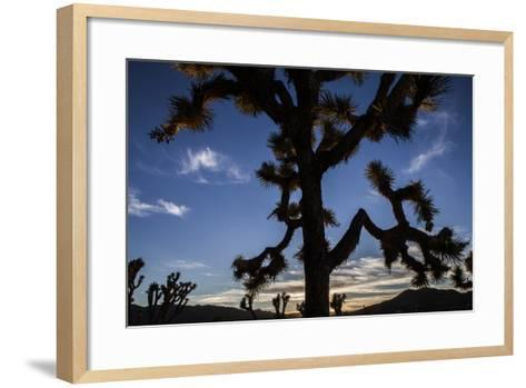A Joshua Tree Silhouetted Against the Sunset Sky in Lost Horse Valley-Kent Kobersteen-Framed Art Print