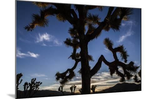 A Joshua Tree Silhouetted Against the Sunset Sky in Lost Horse Valley-Kent Kobersteen-Mounted Photographic Print