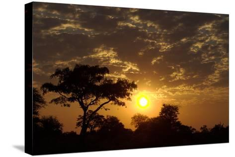 Sunset, Upper Vumbura Plains, Botswana-Anne Keiser-Stretched Canvas Print