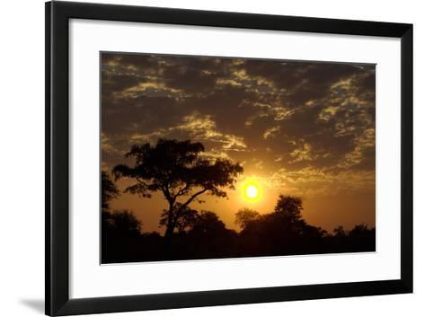 Sunset, Upper Vumbura Plains, Botswana-Anne Keiser-Framed Art Print