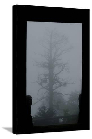 Misty Forest of Emei Shan-Tyrone Turner-Stretched Canvas Print