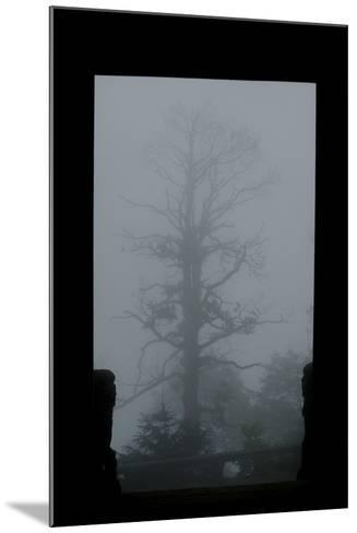Misty Forest of Emei Shan-Tyrone Turner-Mounted Photographic Print