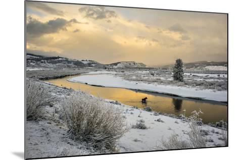 A Moose Fords Buffalo Fork River Near Grand Teton-Charlie Hamilton James-Mounted Photographic Print