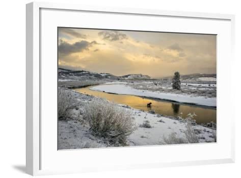 A Moose Fords Buffalo Fork River Near Grand Teton-Charlie Hamilton James-Framed Art Print