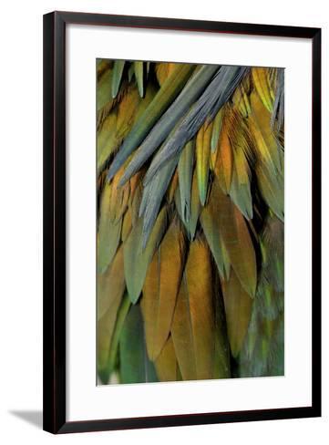 Feathers of a Nicobar Pigeon, Caloenas Nicobarica-Timothy Laman-Framed Art Print