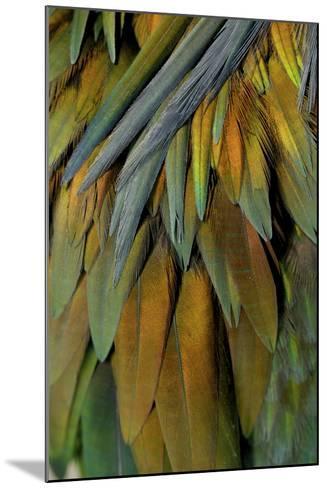Feathers of a Nicobar Pigeon, Caloenas Nicobarica-Timothy Laman-Mounted Photographic Print
