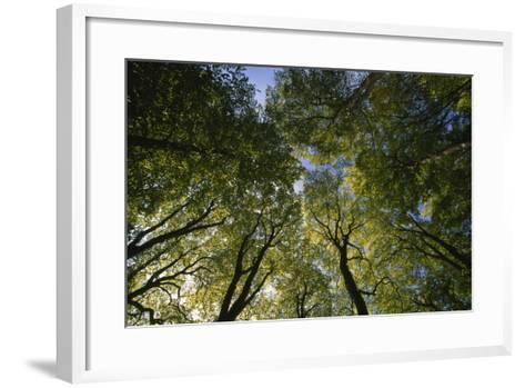 Low Angle View of Trees in Jasmund National Park-Norbert Rosing-Framed Art Print