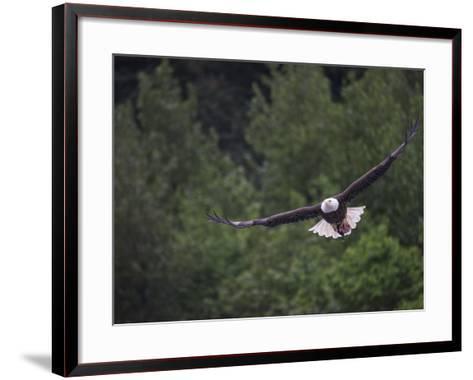 A Bald Eagle with Fish Head Near Juneau-Michael Melford-Framed Art Print