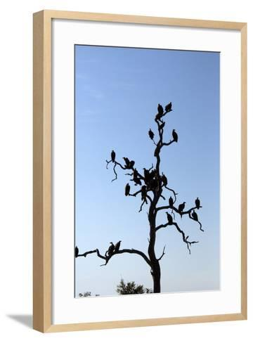 Vultures Perch on a Tree, Selinda Camp, Botswana-Anne Keiser-Framed Art Print
