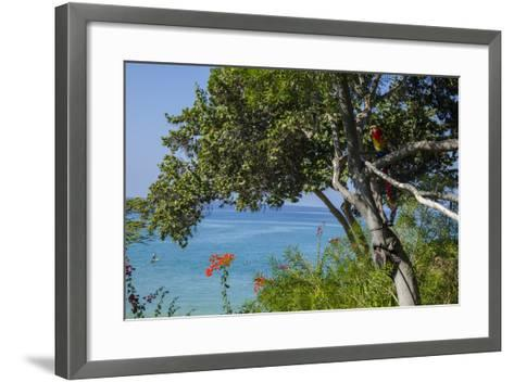 Macaw Perching on the Branch of a Tree with Idyllic Ocean in Background, Hawaii-Peter Mcbride-Framed Art Print