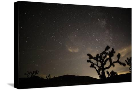 The Star-Filled Night Sky over Lost Horse Valley in Joshua Tree National Park-Kent Kobersteen-Stretched Canvas Print