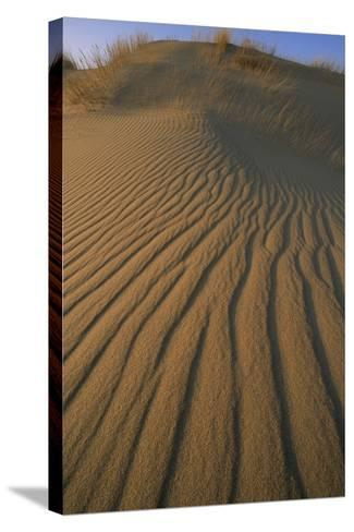 Sand Dune with Ripples Created by Wind-Norbert Rosing-Stretched Canvas Print