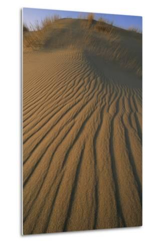 Sand Dune with Ripples Created by Wind-Norbert Rosing-Metal Print