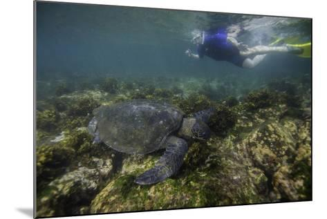 Snorkeler Swimming with a Green Sea Turtle-Jad Davenport-Mounted Photographic Print
