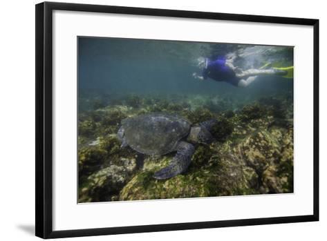 Snorkeler Swimming with a Green Sea Turtle-Jad Davenport-Framed Art Print