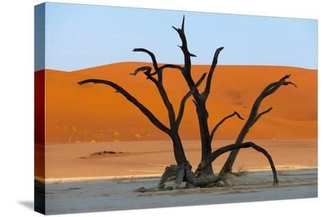Dead Acacia Trees Silhouetted Against Sand Dunes at Deadvlei in Namibia-Alex Treadway-Stretched Canvas Print
