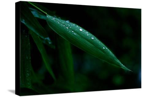Water Droplets on Green Leaf-Tyrone Turner-Stretched Canvas Print