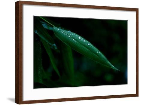 Water Droplets on Green Leaf-Tyrone Turner-Framed Art Print