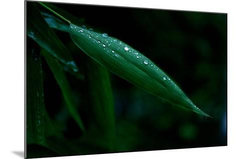 Water Droplets on Green Leaf-Tyrone Turner-Mounted Photographic Print