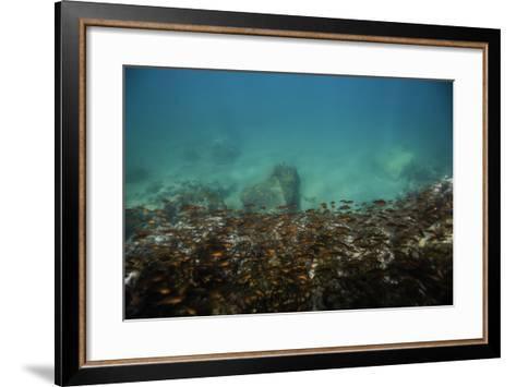 Schools of Tropical Fish Swimming Underwater-Jad Davenport-Framed Art Print