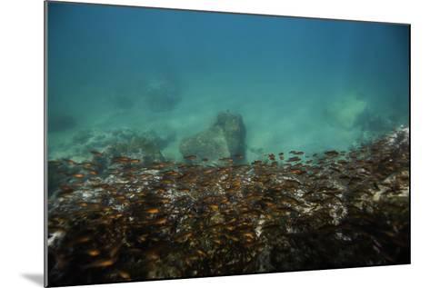 Schools of Tropical Fish Swimming Underwater-Jad Davenport-Mounted Photographic Print