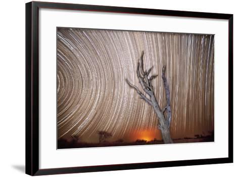 Star Trails Light Up the Sky Above a Lone Acacia Tree-Matthew Hood-Framed Art Print