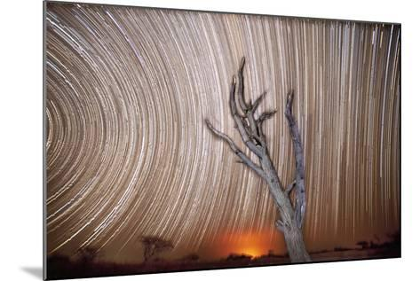 Star Trails Light Up the Sky Above a Lone Acacia Tree-Matthew Hood-Mounted Photographic Print
