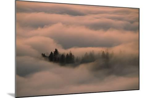 Islands of Trees Peaking Out of Thick Layer of Clouds in the Valley-Norbert Rosing-Mounted Photographic Print